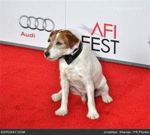 uggie-the-dog-afi-fest-2011-artist-special-12Oqng