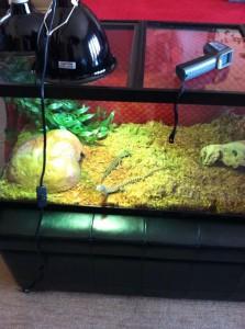 prince jackson snakes